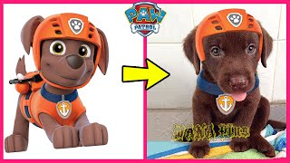 Paw Patrol Characters In Real Life 2020 | WANA Plus