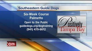 Positively Tampa Bay: Dog Training