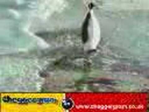 Penguin Slaps Penguin