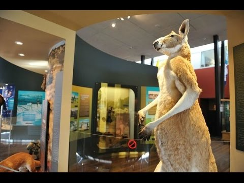 Western Australian Museum & State Library - Perth