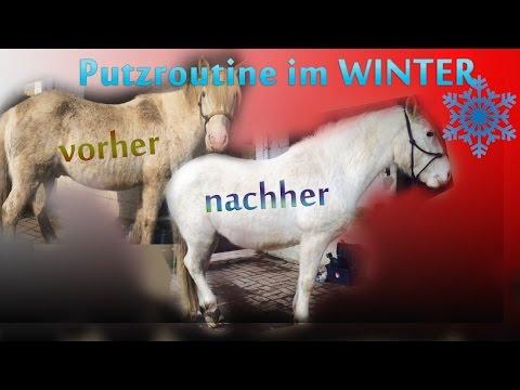 SHADOW    Pferd putzen - Winter Putzroutine