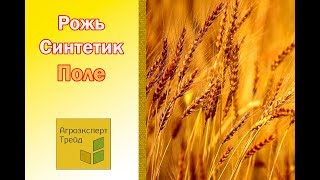 Жито Озиме - Рожь Озимая Посевная в Украине