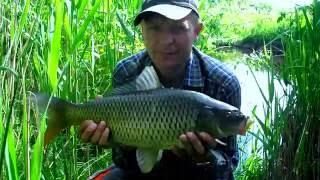 Ловля одной рыбы одновременно на две снасти. Рыбалка на реке.
