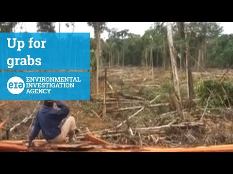 Up for Grabs - Deforestation And Exploitation In Papua's Plantations Boom