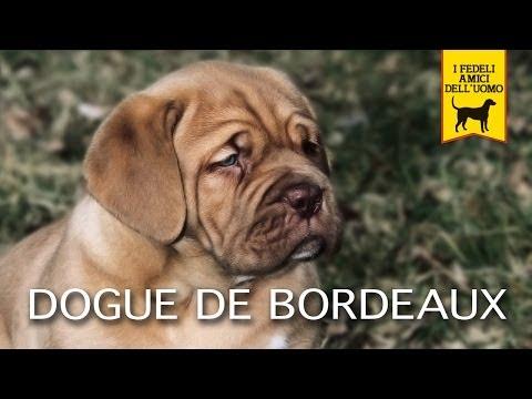 DOGUE DE BORDEAUX trailer documentario