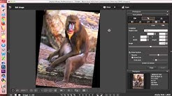 Digital Photo Professional (DPP) 4: Editing Images