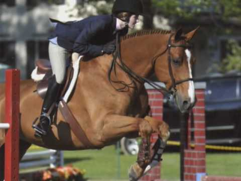 Choosing a Hunt Coat or Shadbelly - Equestrian Neightion - YouTube