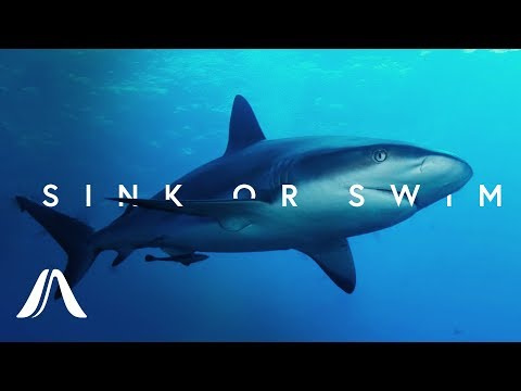 Why Do Sharks Have To Keep Swimming?