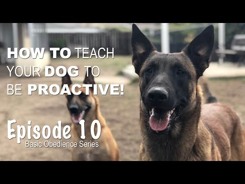 How to teach your dog to be PROACTIVE. Episode 10