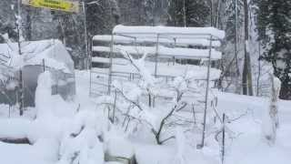 Aquaponics in winter.. heating your water for FREE..