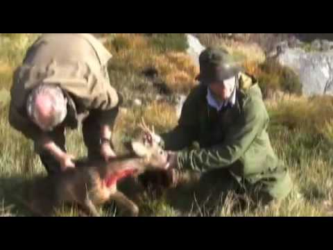 Fieldsports Britain : Stalking at Balmoral and snipe shooting in Wales (episode 5)