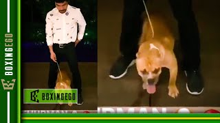 WILDIN! MANNY PACQUIAO NAMES HIS NEW DOG 'THURMAN' AFTER KEITH THURMAN LMAO
