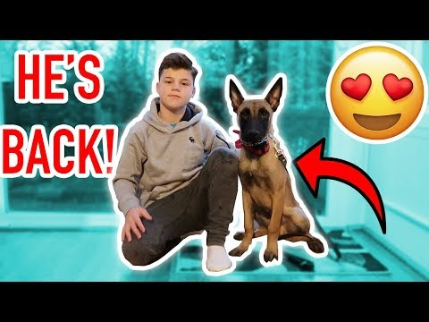 MY NEW PUPPY IS BACK! (BEST POLICE DOG)