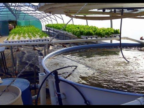 Cria o til pia em piscina de lts doovi for Criar mojarras en casa