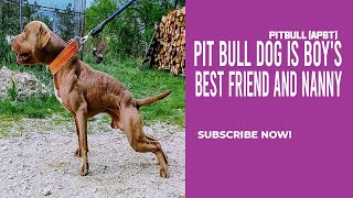 Pit Bull Dog is Boy's Best Friend and Nanny the APBT