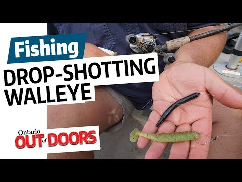 Drop-shotting walleye