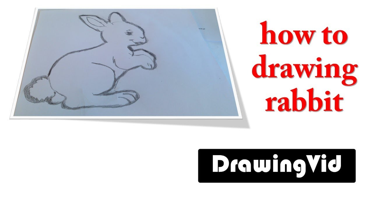 How To Drawing Rabbit  Picture Draw By Hand