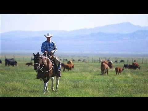 The Last Cowboy at Pine Creek Ranch