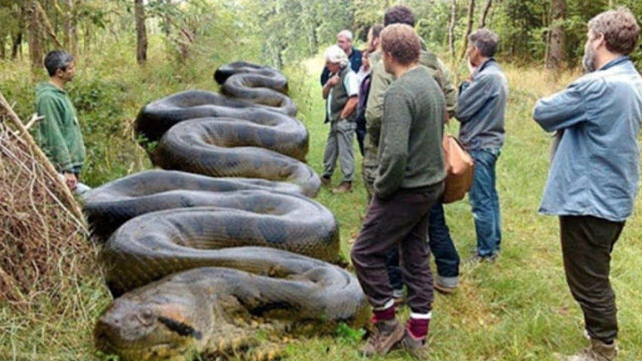 Essa cobra é o TERROR de animais indefesos