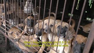 Trailer for The Dog Meat Professionals: South Korea 대한의 육견인들