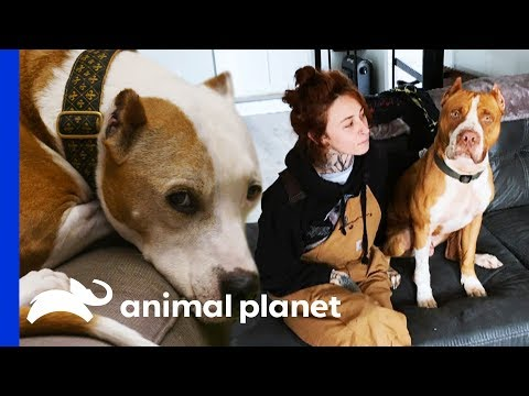 These Special Pups Stole The Hearts Of Their Rescuers | Pit Bulls & Parolees