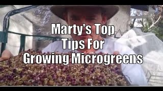 Marty's Top Tips For Growing Microgreens At Home