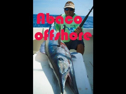 Marlin, Wahoo, and Dolphin in Abaco, Bahamas