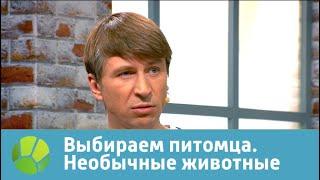 Выбираем питомца с Алексеем Ягудиным. Необычные животные