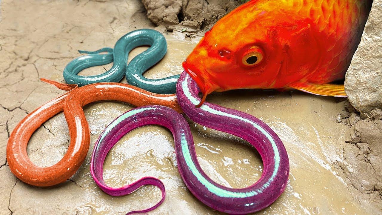 금붕어는 지하에서 바다 거북을 사냥 Stop Motion Cooking ASMR 이상한 음식 도전 : 거대한 개구리, 바다 거북 Funny Video 스톱 모션 요리