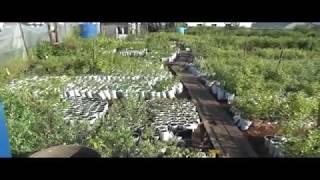 видео питомники саженцев во владимирской области