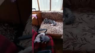 Отдам в добрые руки котят /родились 4 июля 2018 част.1