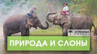 Пхукет! ТРИП ПО АЗИИ    Храм с дикими обезьянами   STREKOZA Travel