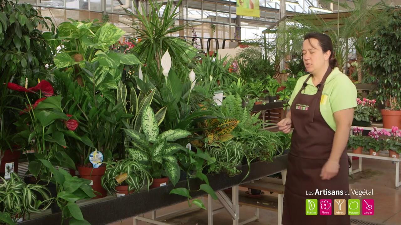 Quelles Plantes Pour Assainir L Air De Son Interieur 4 Plantes Pour Purifier L Air De Sa Maison Youtube