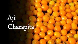 Capsicum Chinense cv. Aji Charapita   Asklepio.info