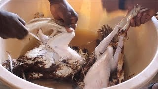 How To Clean And Cut Ghana Chicken Very Well  / My Sister's Style / Obaapa Kitchen