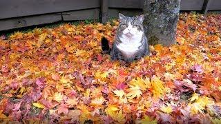 秋のねこ3。-Maru&Hana in Autumn 3.-