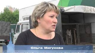 Пресс тур по отлову бродячих собак