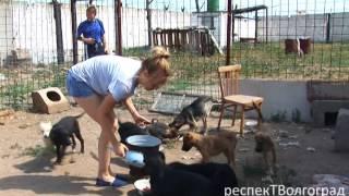 """Спасите  приют для домашних животных """"Дино"""" !!! rtv-34.com"""