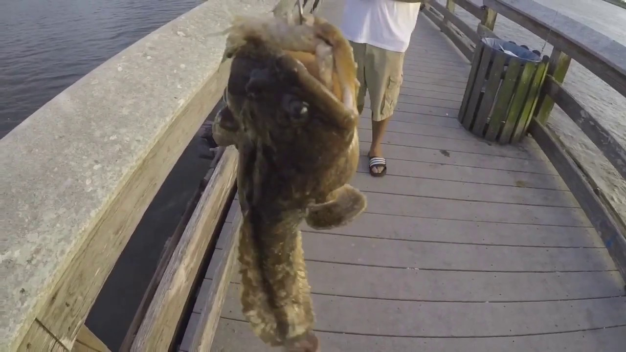 Pier fishing in florida catching bait fish with sabiki for Best bait for pier fishing
