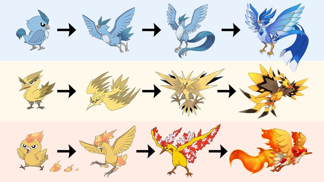 All Legendary Birds Evolution | Pokemon Gen 8 Fanart - YouTube