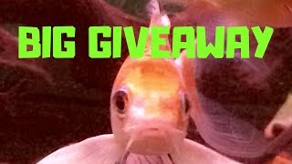 700 Subscriber Giveaway and How-to High Function / Low Tech Aquarium Lid Build; Nature Appreciation