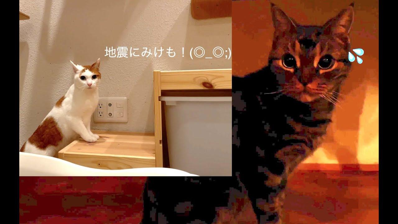 地震にびっくりしてまた寝た猫たち