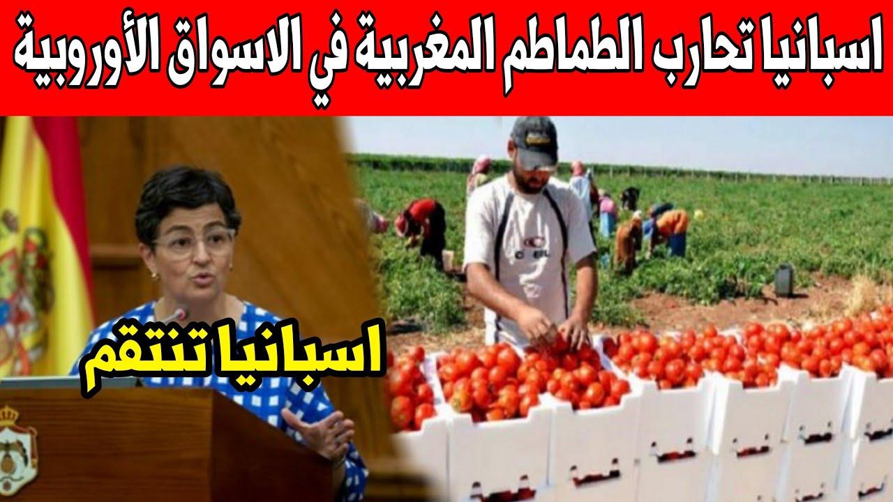 عاجل ورد الآن .. إسبانيا تحارب الطماطم المغريية في الأسواق الأوروبية