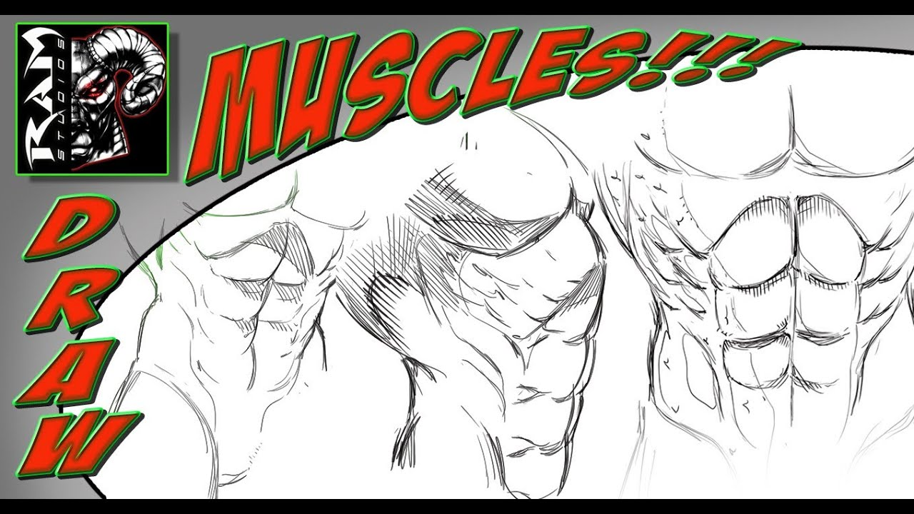 Drawing Stomach Muscles - Anatomy for Comic Illustration - YouTube
