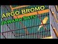 Kenari Kecil Mungil Juara 1 Di Event Bupati Landak Cup 3 2019 Kenari Argo Bromo Tembakan(.mp3 .mp4) Mp3 - Mp4 Download