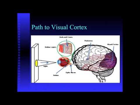 Virtual Grand Rounds: Behavioral Optometry and Visual Care for the LD, ID, and ND Population