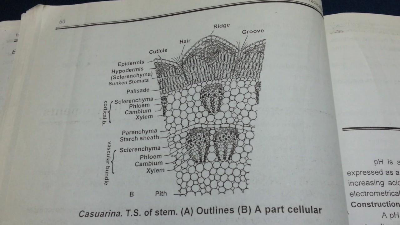 Bsc  Part III Botany practicals, Raj  Uni