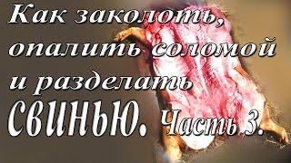 Как зарезать, опалить соломой и разделать свинью. 3 часть.(Как заколоть свинью? Зарезать свинью придется рано или поздно. Убой свиней-- финальный этап. Первый самостоя..., 2014-06-05T19:58:14.000Z)