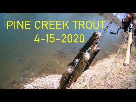 Trout At Pine Creek 4-15-20