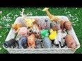 Speelgoed filmpjes youtube voor peuters dieren leren nederlands - Dierengeluiden voor peuters